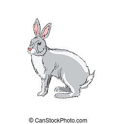 dessiné, illustration, lapin, main