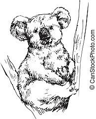 dessiné, koala, main