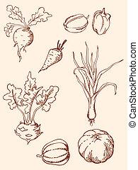 dessiné, légumes, main, vendange