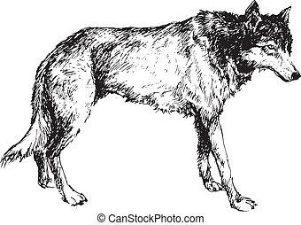 dessiné, loup, main