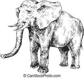 dessiné, main, éléphant