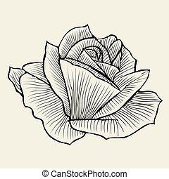dessiné, main, rose