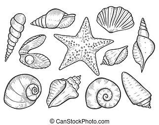 dessiné, main, seashell