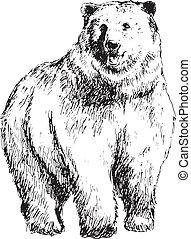 dessiné, ours, main