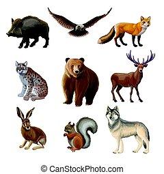dessin animé, forêt, animaux, ensemble