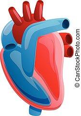 dessin animé, humain, style, coeur, anatomie, icône