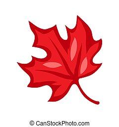 dessin animé, illustration, érable rouge, leaf.