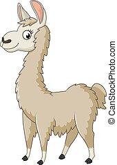 dessin animé, lama