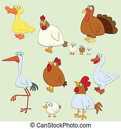 dessin animé, oiseau, ensemble
