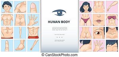 dessin animé, parties, concept, corps humain