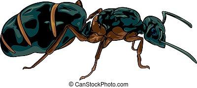 colonie fourmi colline fourmis dessin anim colonie vecteur eps rechercher des clip. Black Bedroom Furniture Sets. Home Design Ideas