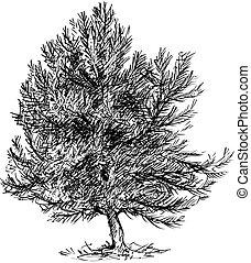 arbre dessin anim illustration conif re arbre sapin. Black Bedroom Furniture Sets. Home Design Ideas