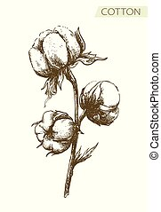 dessin, fond blanc, branche, crayon, coton