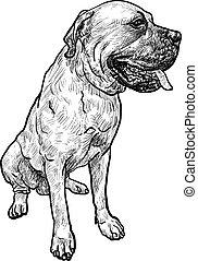 dessin, pose, chien, mastiff, séance