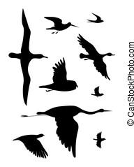 dessin, set., birds., noir, image, vecteur, silhouette