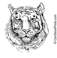 dessin, tigre, noir, typon, croquis, blanc