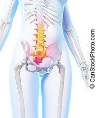 destacado, más bajo, espina dorsal