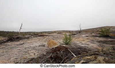 Destroyed by man Arctic tundra - Destroyed as a result of...