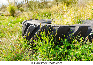 Destroyed rubber car tire on grass.