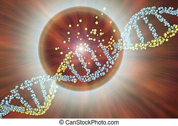 Destruction of DNA, damaged DNA