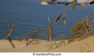 Destruction of Trees, Qld Island, Australia