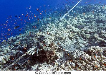destruido, coral, línea, arrecife, amarra