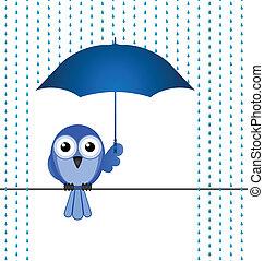 deszcz, chroniąc