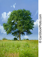 Detached tree in nature on sky background