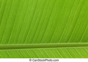 Detail Banana Leave pattern background
