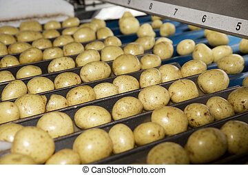Potatoe Industry