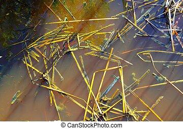 detail, mangovník, bažina, obrazný zředit vodou