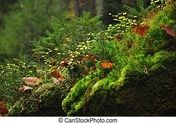 Detail of beautiful green moss in the forest
