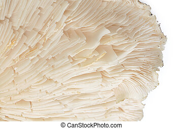 Detail mushrooms isolated on a white background