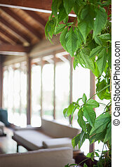 Detail of a green house plant in a spacious living room with a beige sofa and a lot of windows