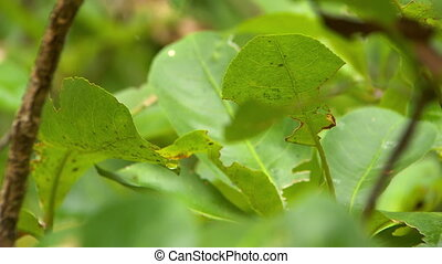 Detail of a leaf with insect damage - Extreme close up of...