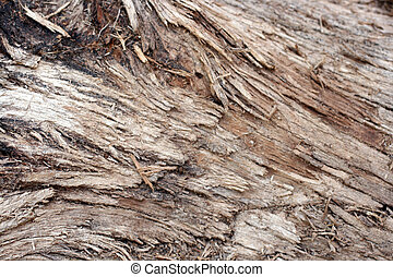 detail of a log