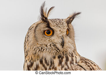 detail of a owl with orange eyes