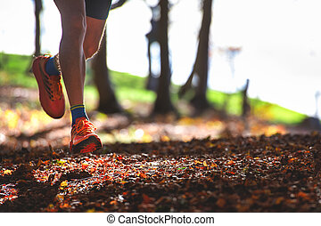 Detail of a runner's shoes in the woods among the dry leaves