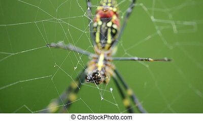 Detail of a spider eating