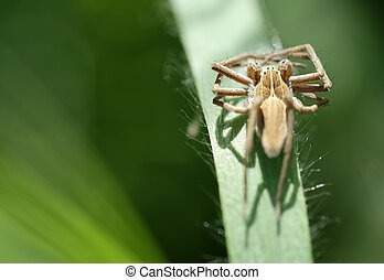 detail of a spider