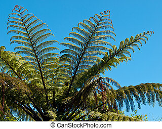 Detail of a tree fern