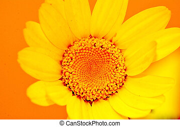 Detail of a wild flower