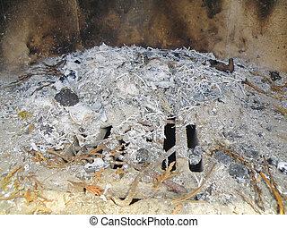 detail of an ash