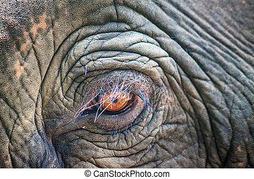 Detail of an elephant's eye, Thailand