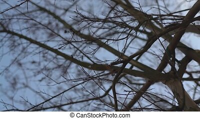 Detail of bare branches in winter
