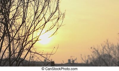 Detail of bare branches at sunset in winter