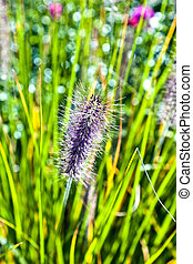 detail of beautiful grass in the meadow