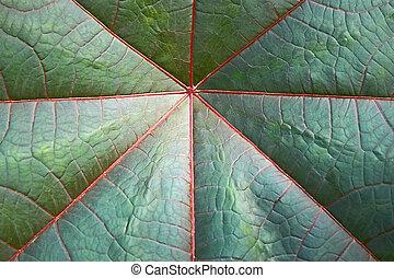Detail of big dark green leaf