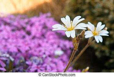 detail of blooming flower