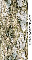 Detail of Brich Bark Texture